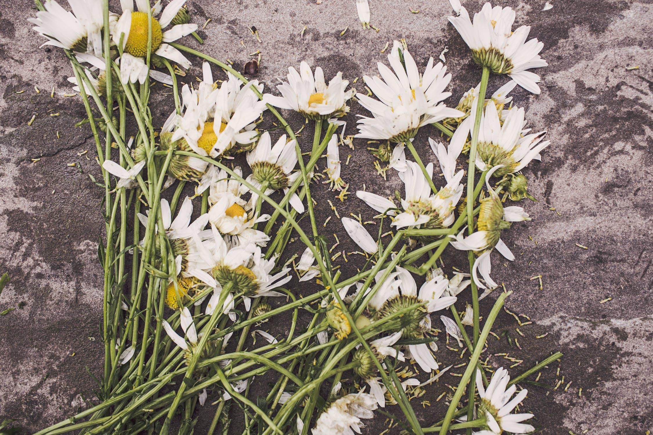 Odszkodowanie i zadośćuczynienie za wypadek ze skutkiem śmiertelnym
